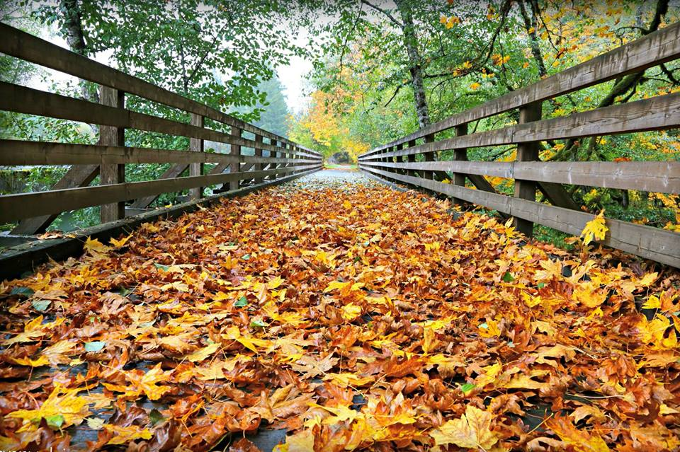 Fall on Banks-Vernonia State Trail